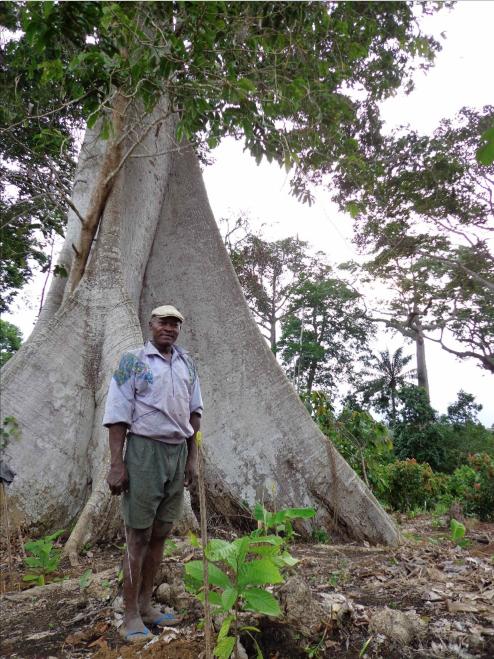 Nel regno di treedom firenze urban lifestyle for Progetti di piantagione