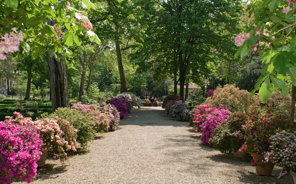 Il giardino dei semplici radici fiorentine da 470 anni firenze