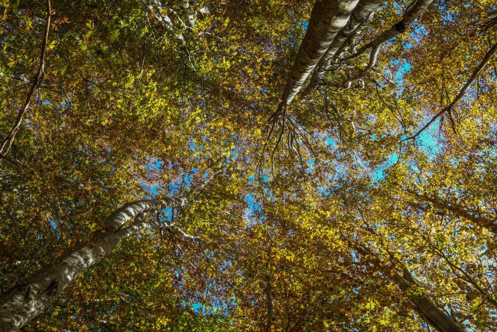 alberi trekking toscana