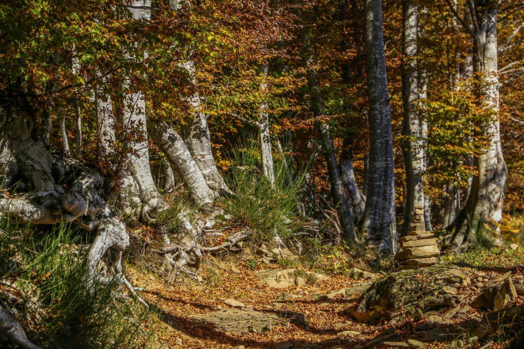 trekking greentrotter toscana